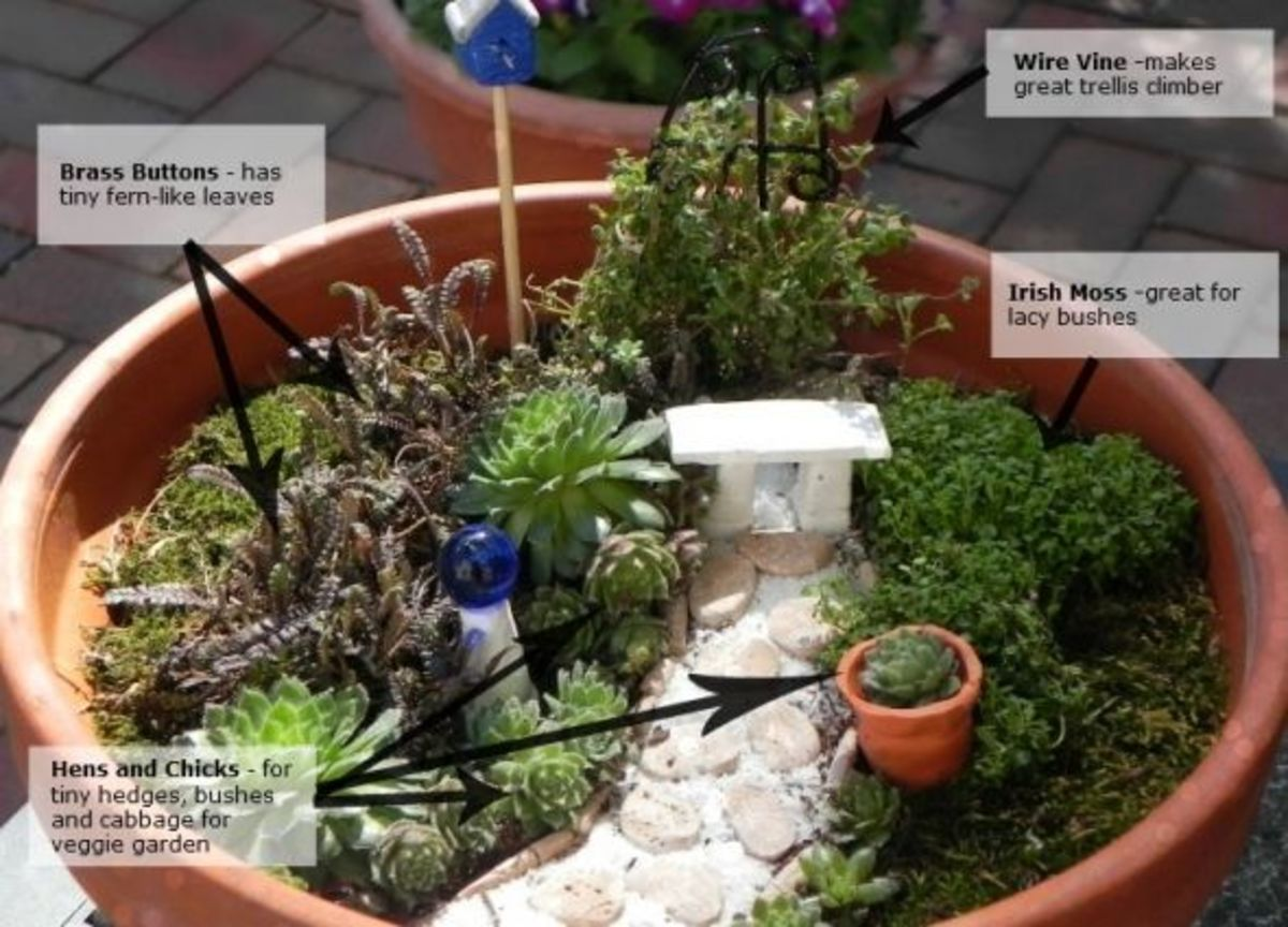 make-your-own-table-top-mini-gardens