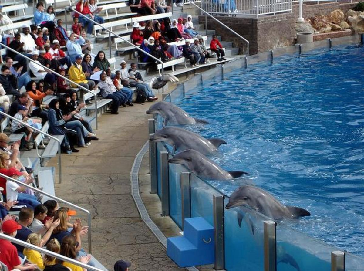 Why Do Some People Think Dolphins are Smarter than Humans?