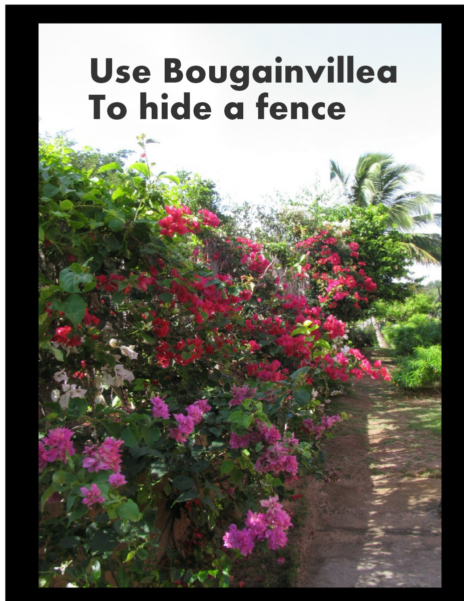 Use flowers to hide a fence