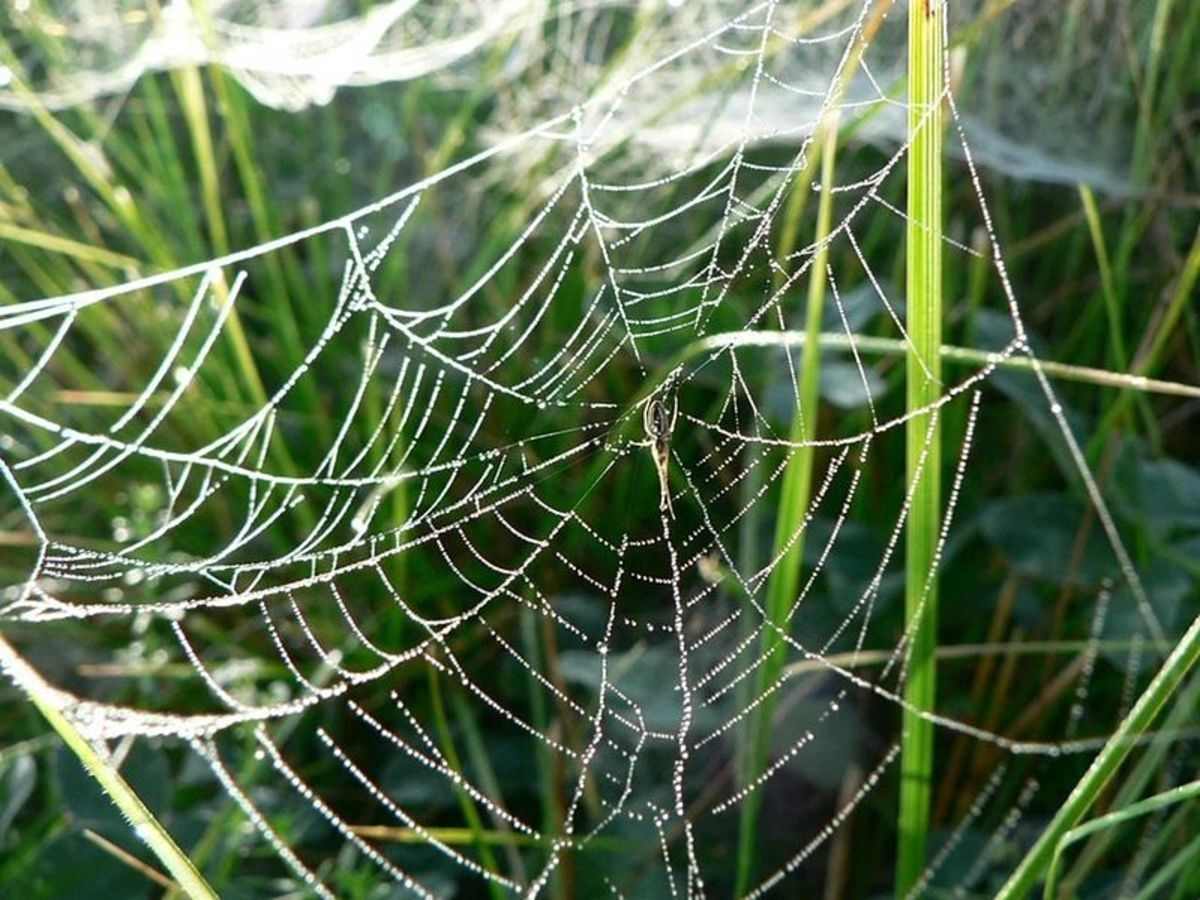 Spider webs are an important part of nature and a beautiful work of art.