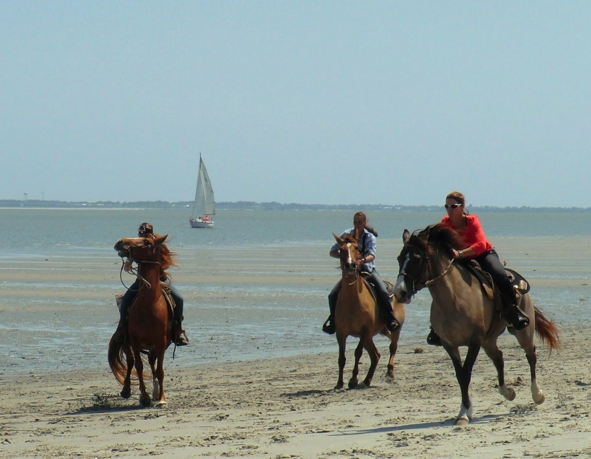 Horse racing on Daufuskie Island on Melrose at the Beach Resort