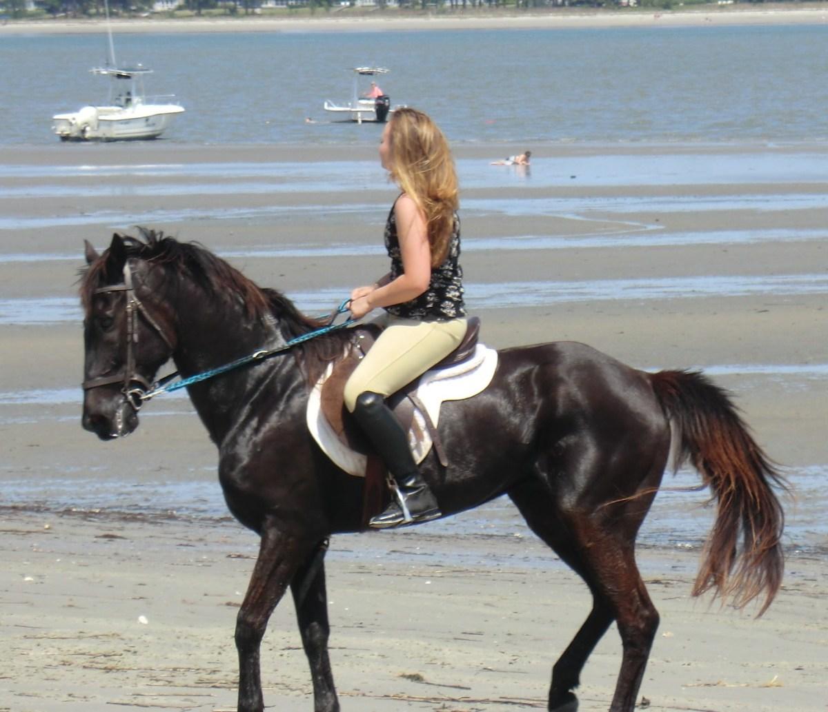 Marsh Tacky horse on Daufuskie Island