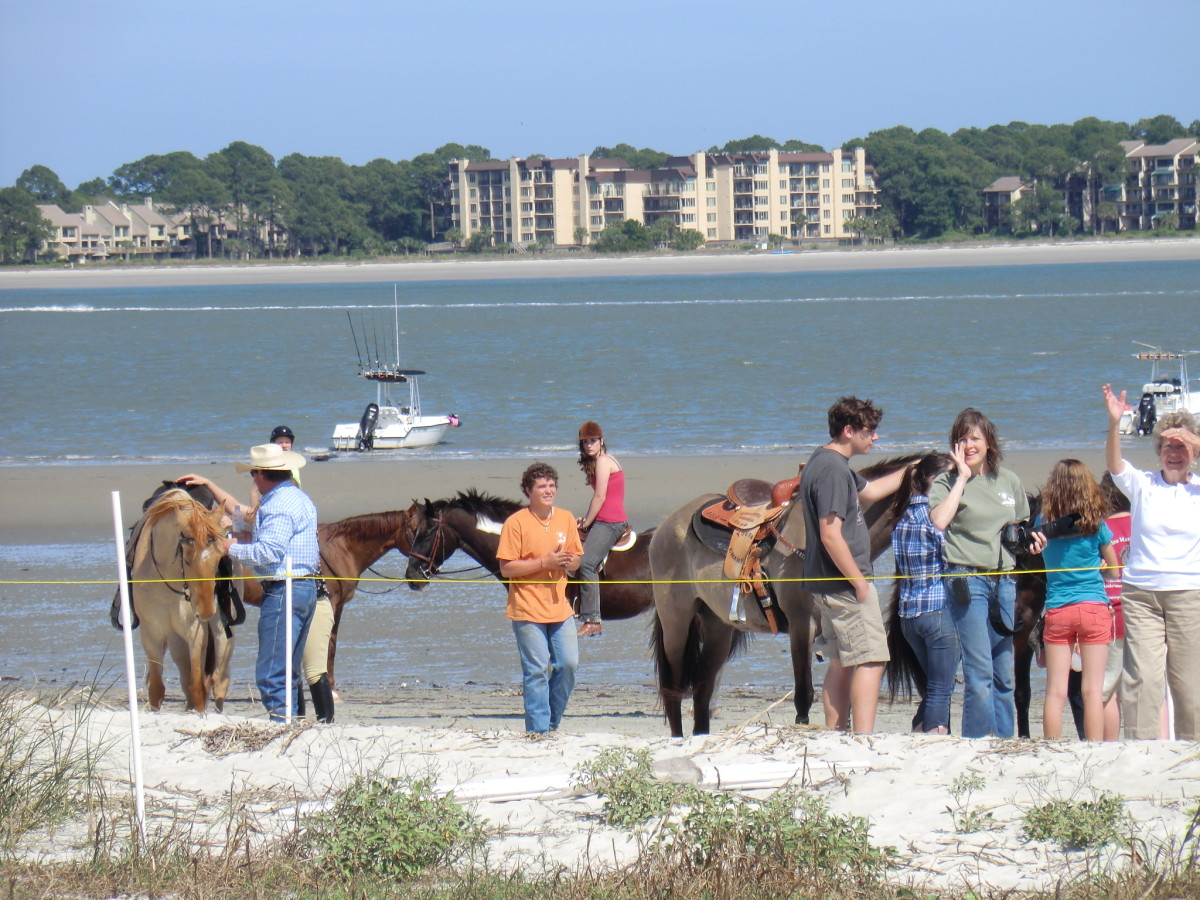 Marsh Tacky Racers gather on the beach