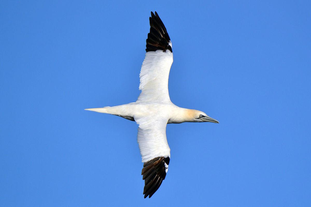 birds-of-iceland