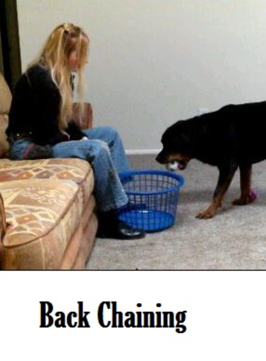 Backchaining in Dog Training