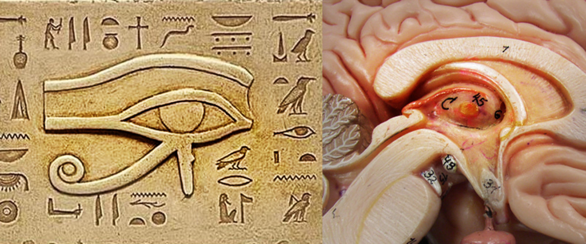 Occultists believe that the Egyptian symbol 'Eye of Horus' represents the mystic third eye - the pineal gland. Look at the similarity between the eye and the cross section of the brain showing the pineal gland.