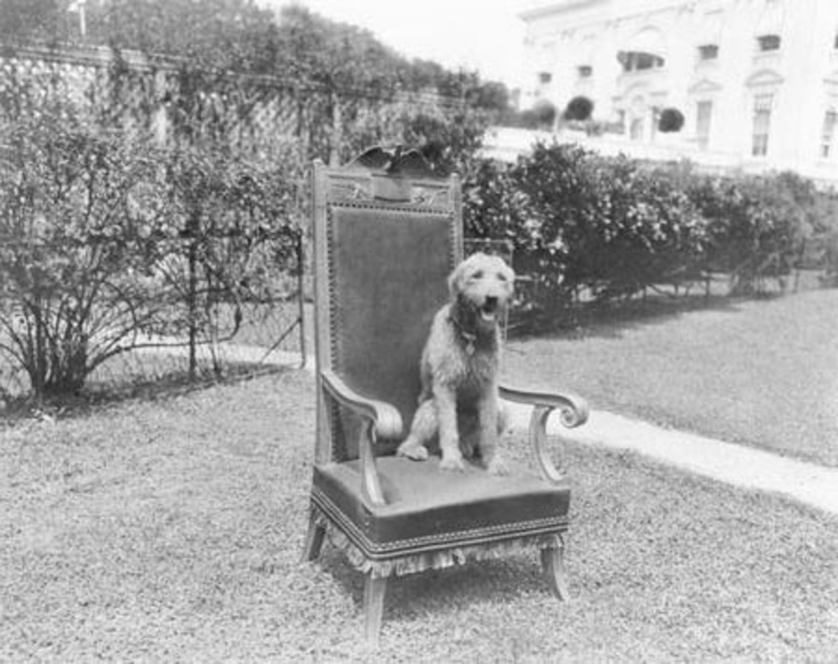 Laddie Boy had his own custom made chair at cabinet meetings.