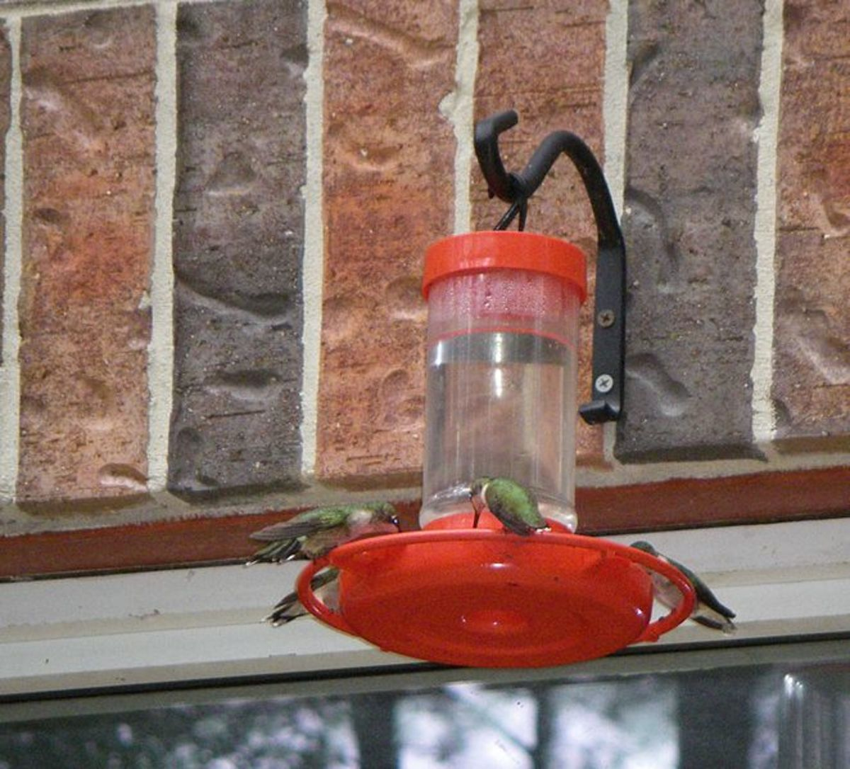Several Hummingbirds Feeding Here In This Photo.