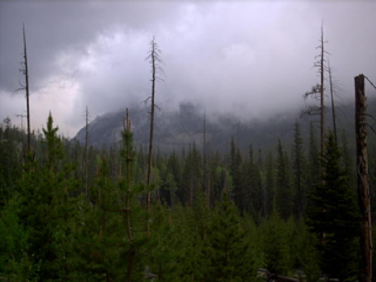 Ozark Mountain Mists