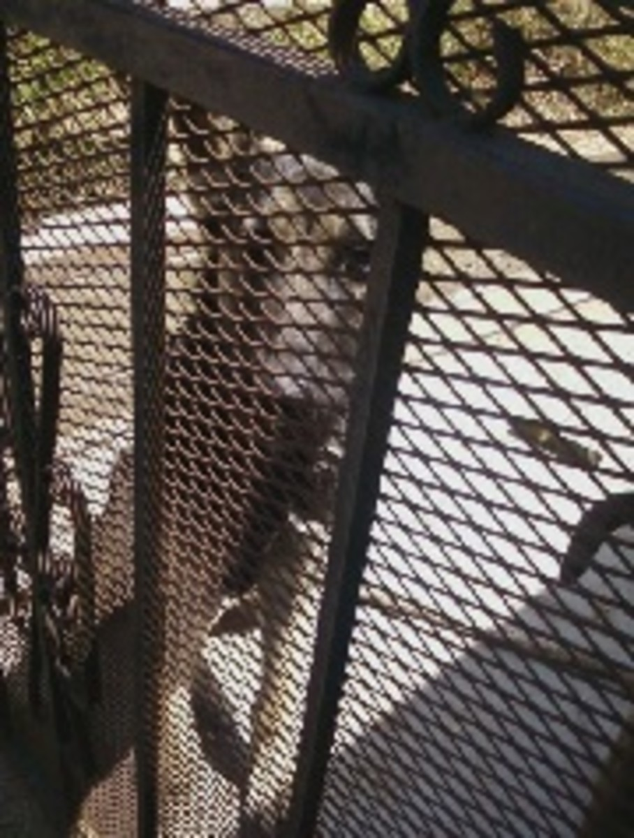This dog has been put behind bars 10 to life for attempted mailman mauling, with no possibility of parole!