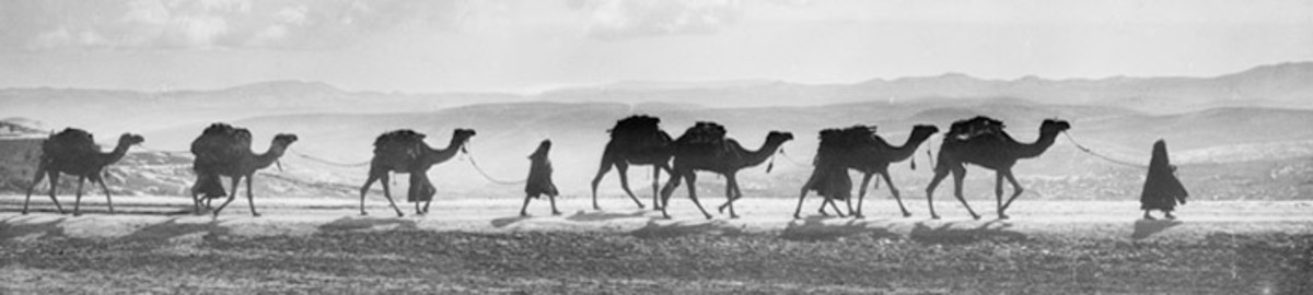Camel caravan travelling on the Mt. of Olives in 1918