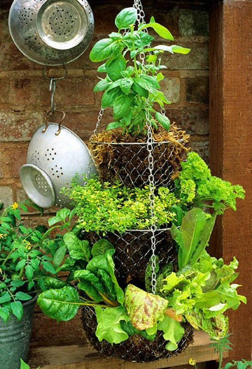 more-ideas-for-container-gardening