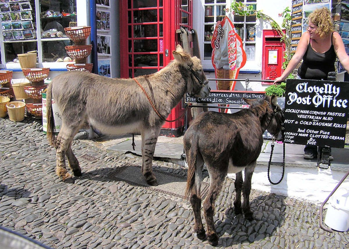 Clovelly Donkeys