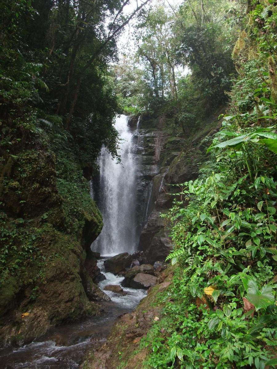 Catarata Rio Tigre Waterfall. Source: Harley Calvert WMC.