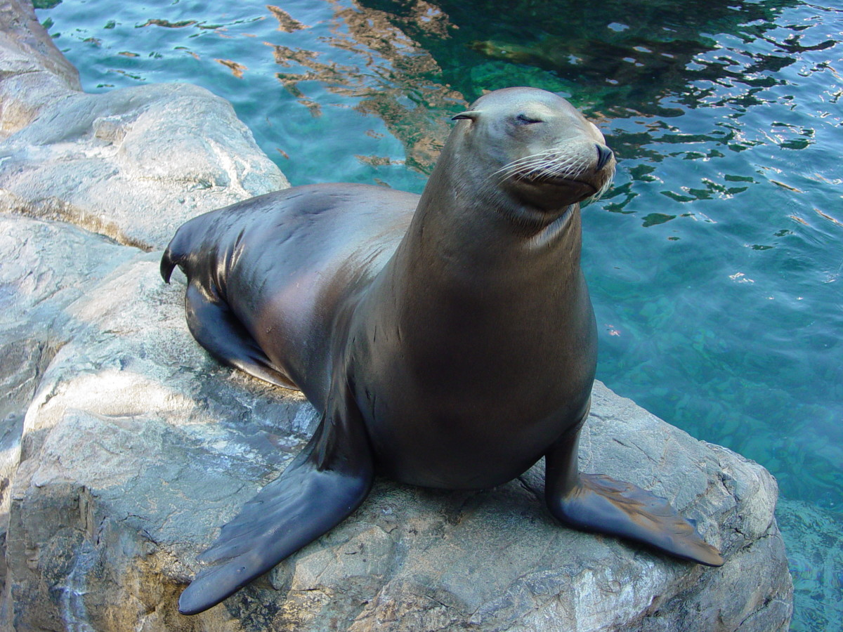 Getting a Job as a Zookeeper or Aquarist | HubPages