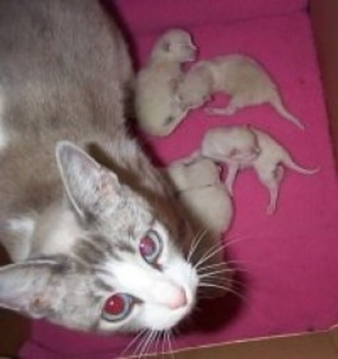 1 day old kittens