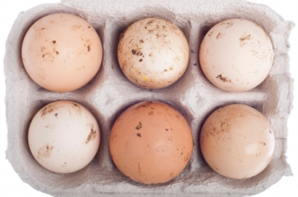 one large egg contains 5 grams of protein