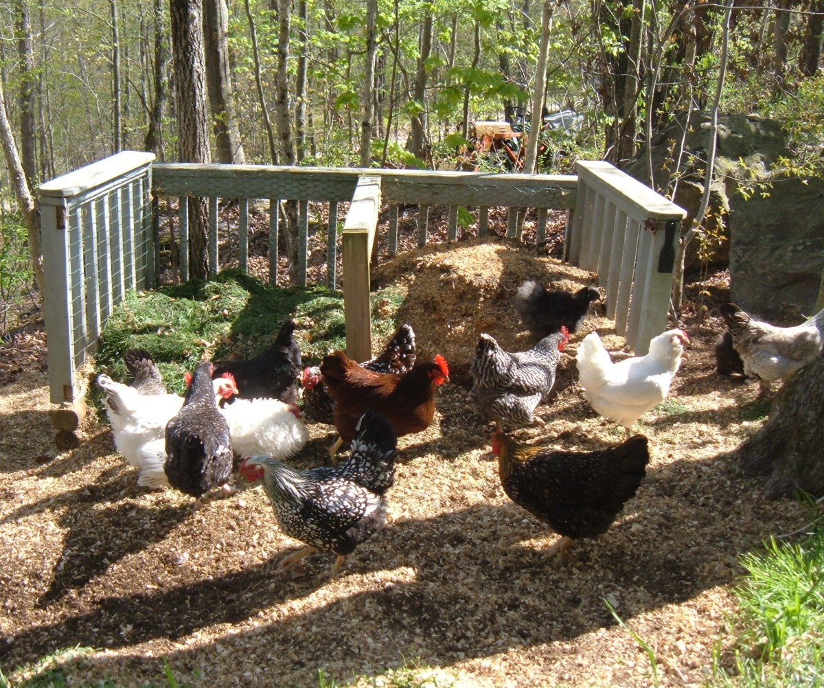 Chickens & Compost Bins