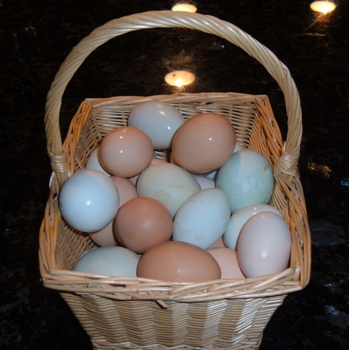 Fresh Backyard Chicken Eggs