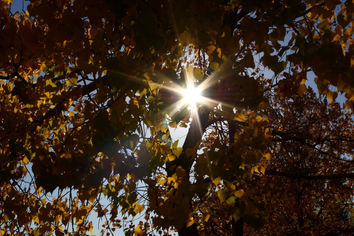 Warm sunlight filtering through the leaves.