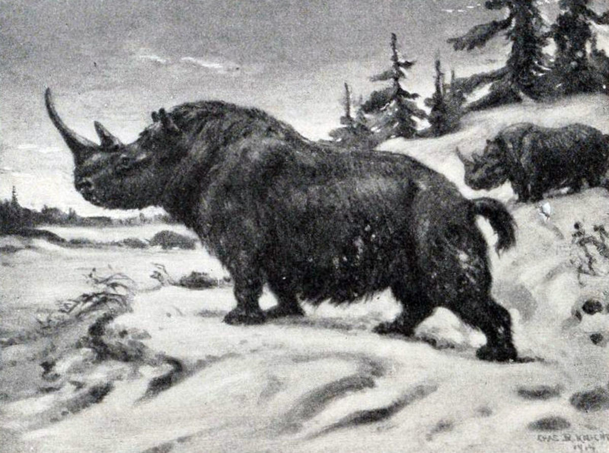 A restoration of a painting of the woolly rhinoceros.