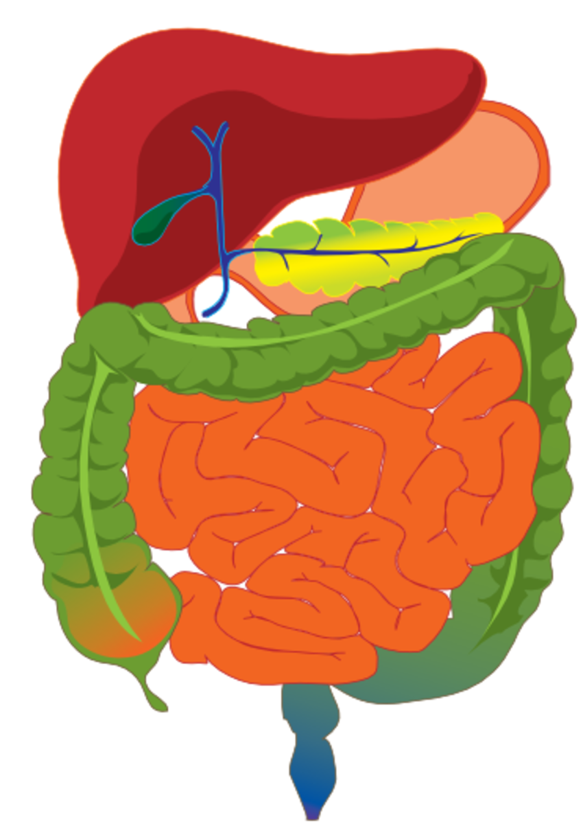 stomach-bloating-and-digestive-transit-time-is-transit-time-causing-your-stomach-woes