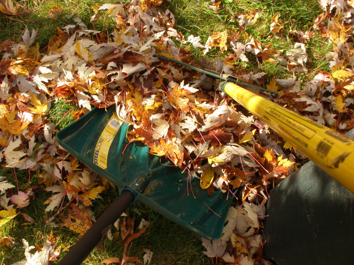 Use the shovel as a dustbin and the rake as a broom to pick up the leaves off the ground.
