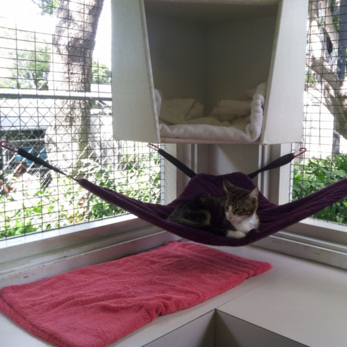 Here's one of the corner cat hammocks I made now in use at the Hawaiian Humane Society Cat House. Cats LOVE hanging out in these hammocks. :)