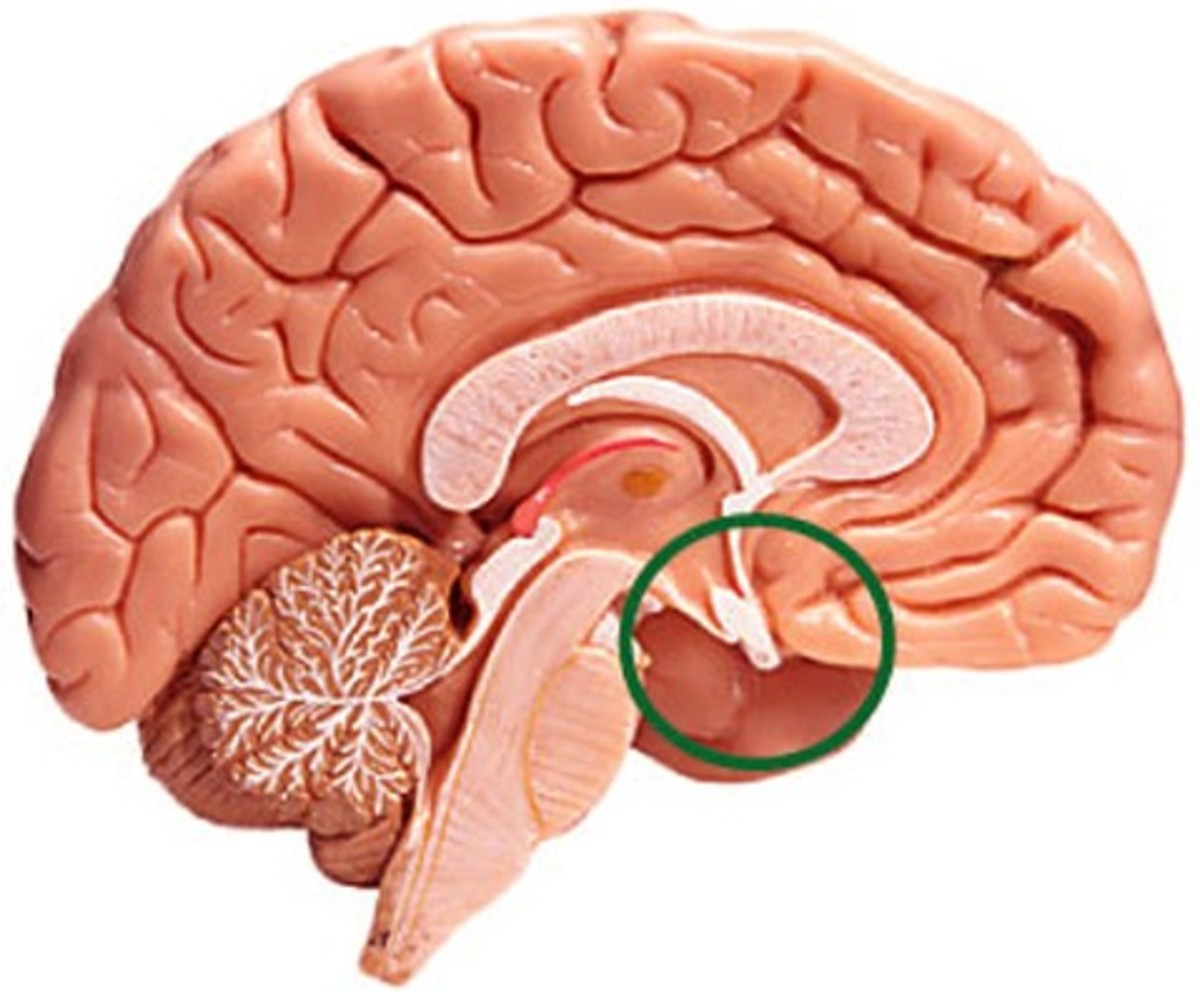 Enlarged Pituitary Gland - Symptoms, Causes, Diagnosis, Treatment