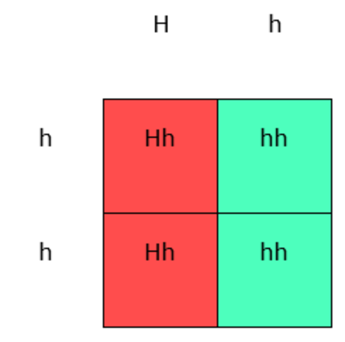 In this Punnett Square, the capital H means the disease is present. Since the HD allele is dominant, only one parent needs to carry it in order for the disease to occur at least 50% of the time.