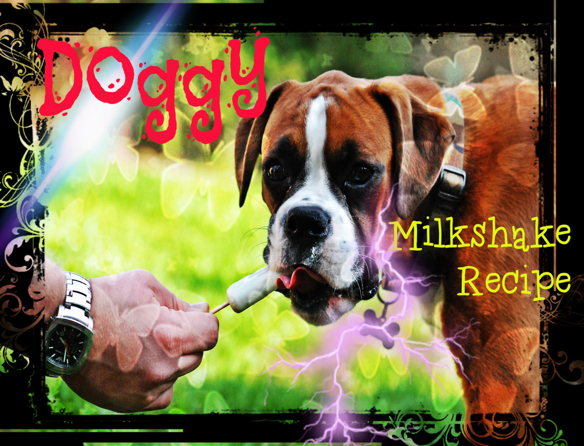 Doggy Milkshake recipes are a great dessert for our four legged friends, and this one is MOSTLY lactose free!!!