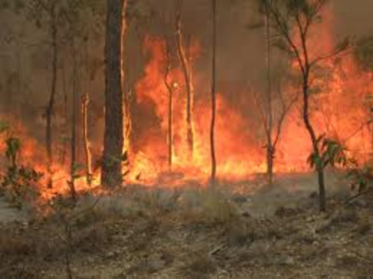 A bush fire