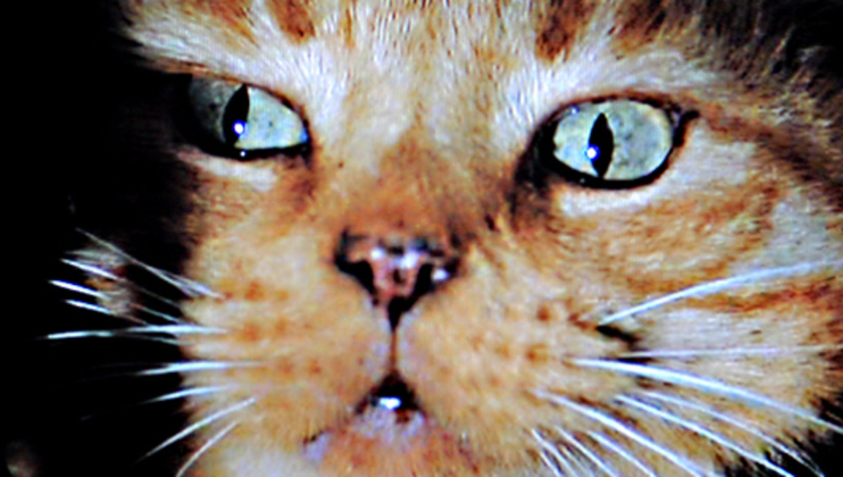 The other member of the cast - Jones the Cat - plays a significant role as events unfold, and the look of terror in his eyes which heralds the first appearance of the full grown Alien is almost as much an iconic image as the Alien itself