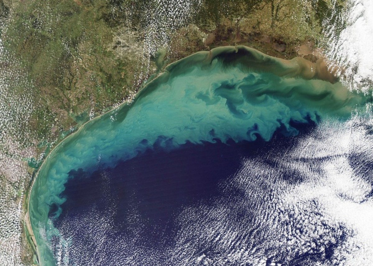 As this second photo shows taken in 2011 the Dead Zone from farm runoff is fa larger than what is shown around the delta region, covering most of the Southern US Coastline.