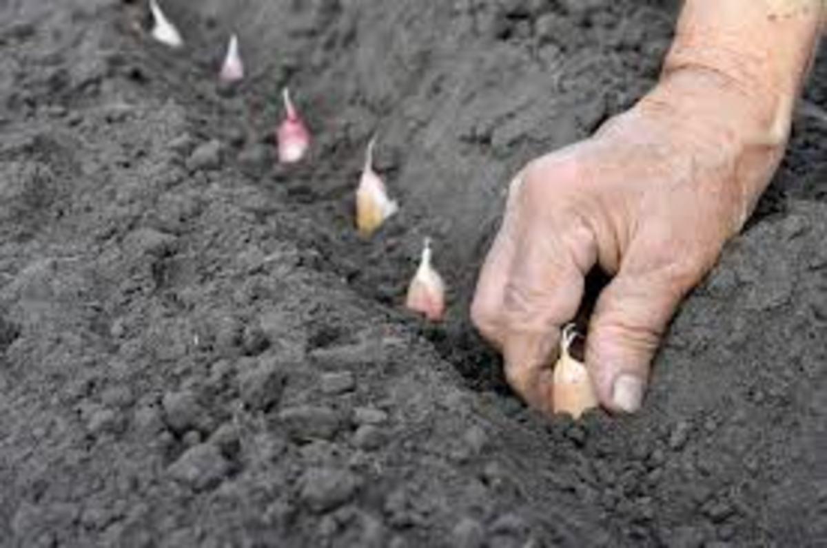 Planting Outside