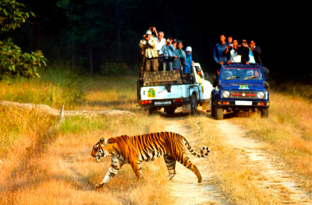 In Thekkady, You Are Strictly In Tiger Territory.