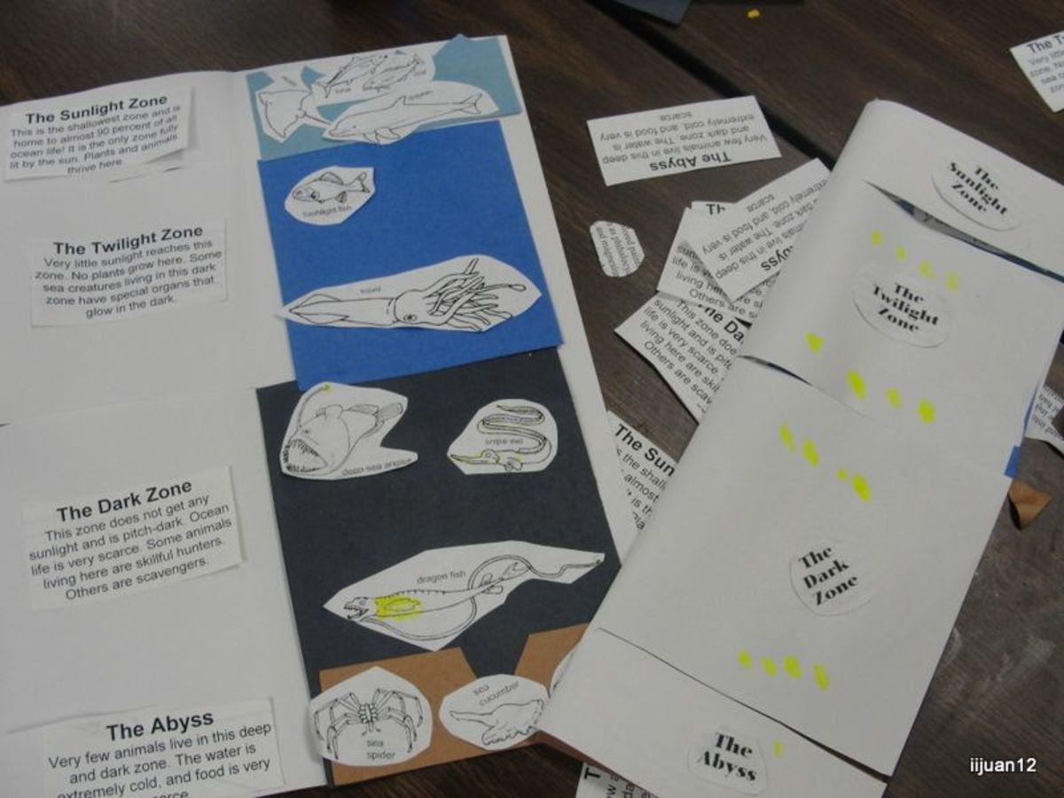Ocean Zone Flap Book