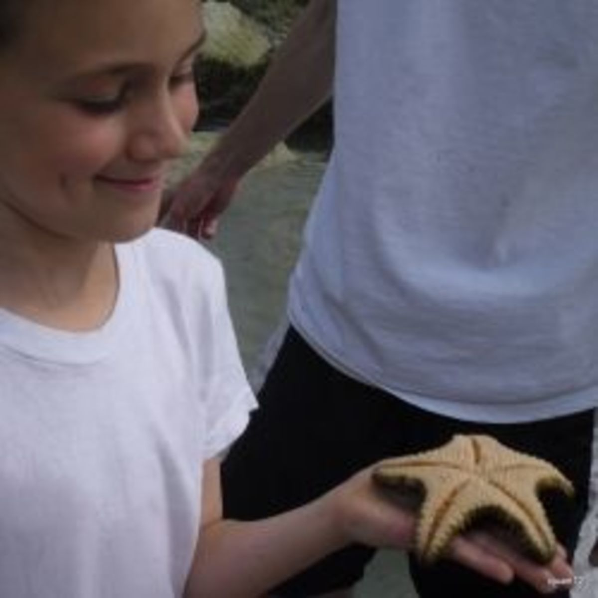 Examining a starfish on our field trip to the beach