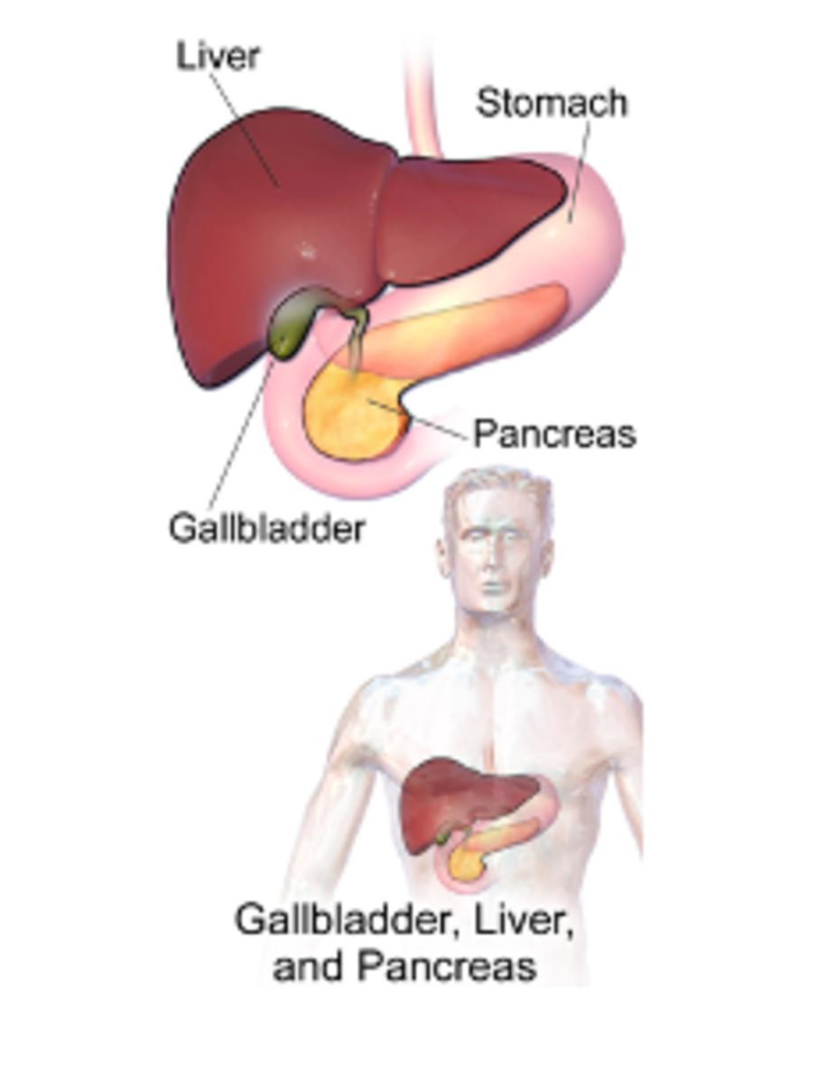 Gallbladder Anatomy -- biliary system
