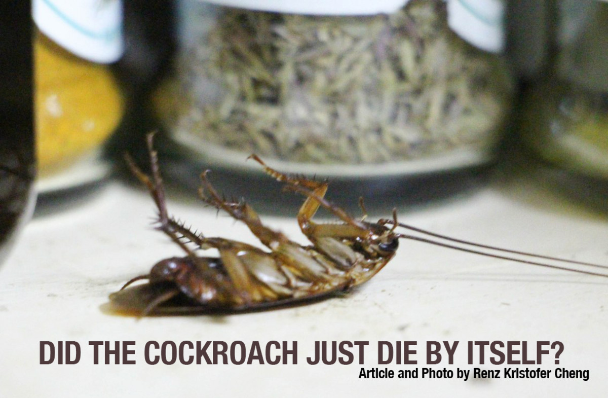 An actual photo of a cockroach that seemed to have died with no reason!