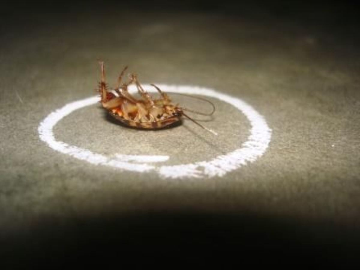 Can roaches die of hunger, thirst, or heart attack?