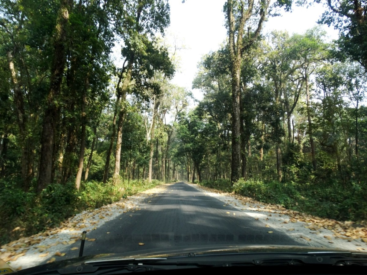 The road through the Buxa Tiger Reserve