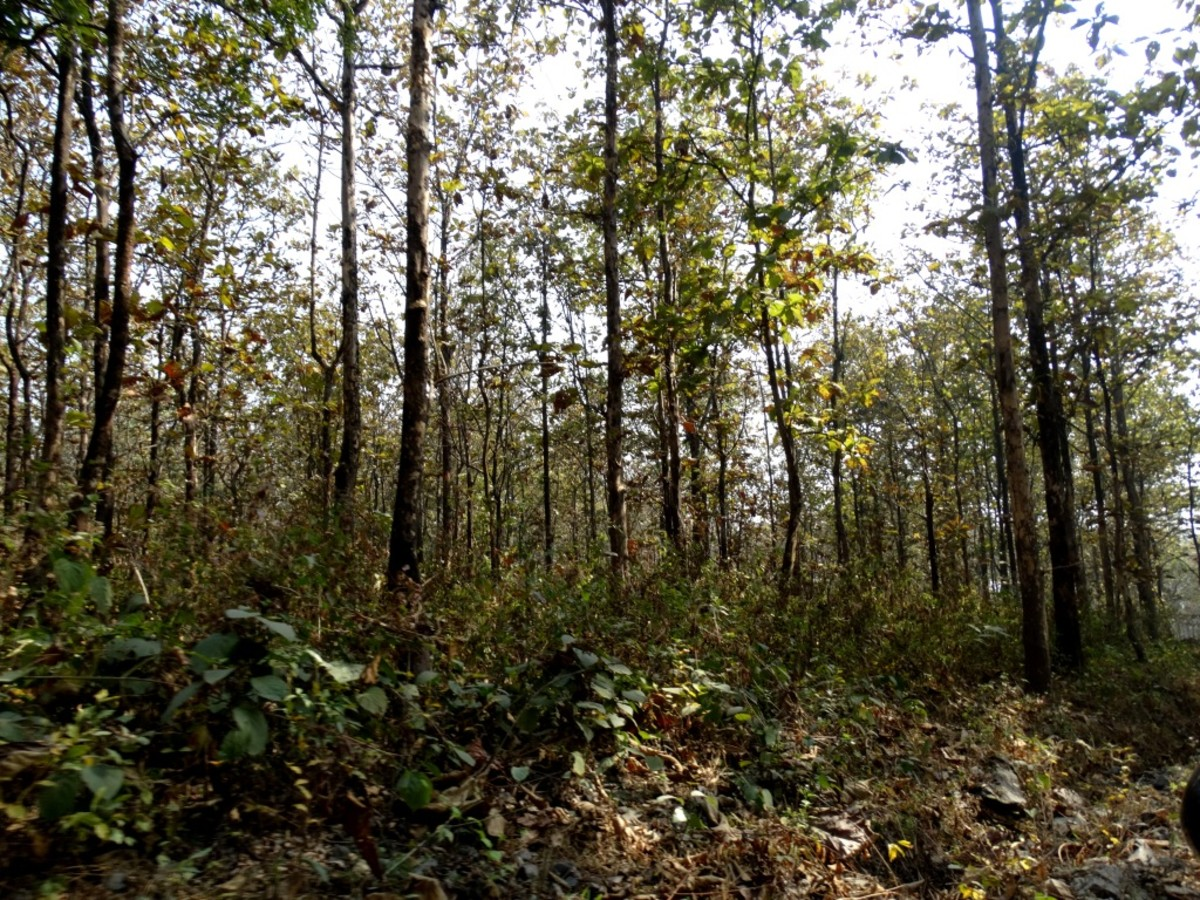 Dense forest of the Buxa Tiger Reserve
