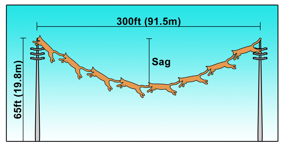 cat-mathematics-cat-stacking-catenary-cables-cat-piles