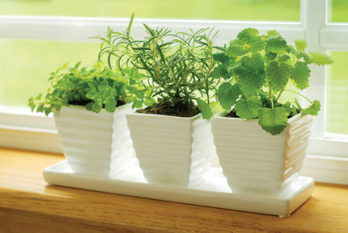 No room to plant an herb garden?  Plant your herbs in small containers for a kitchen window sill garden!