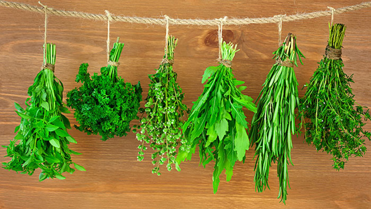 Drying herbs for winter use.