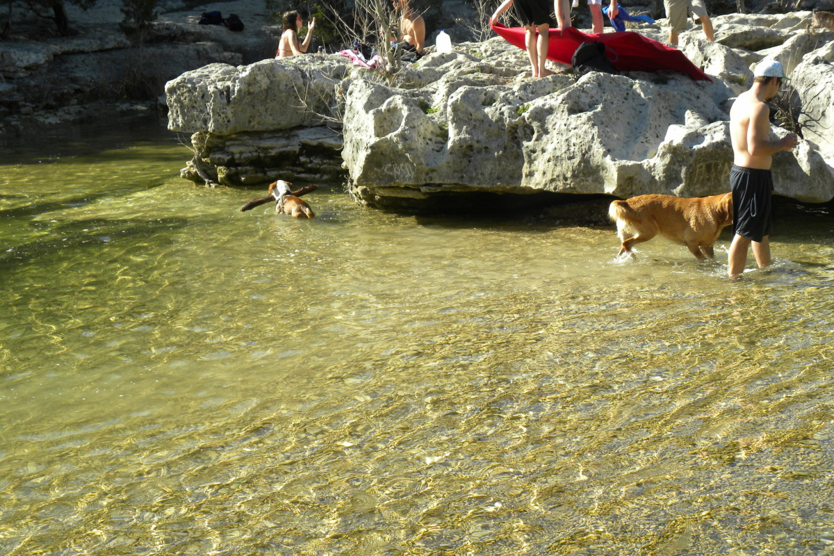 People and Pets can enjoy the outdoors at Barton Creek Twin Falls Greenbelt Trail Austin TX