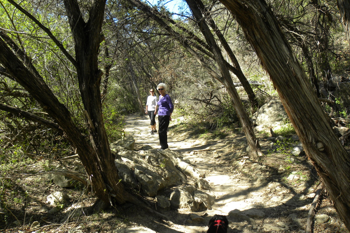 Tree Shaded Trails at Barton Creek Trails Austin Texsa