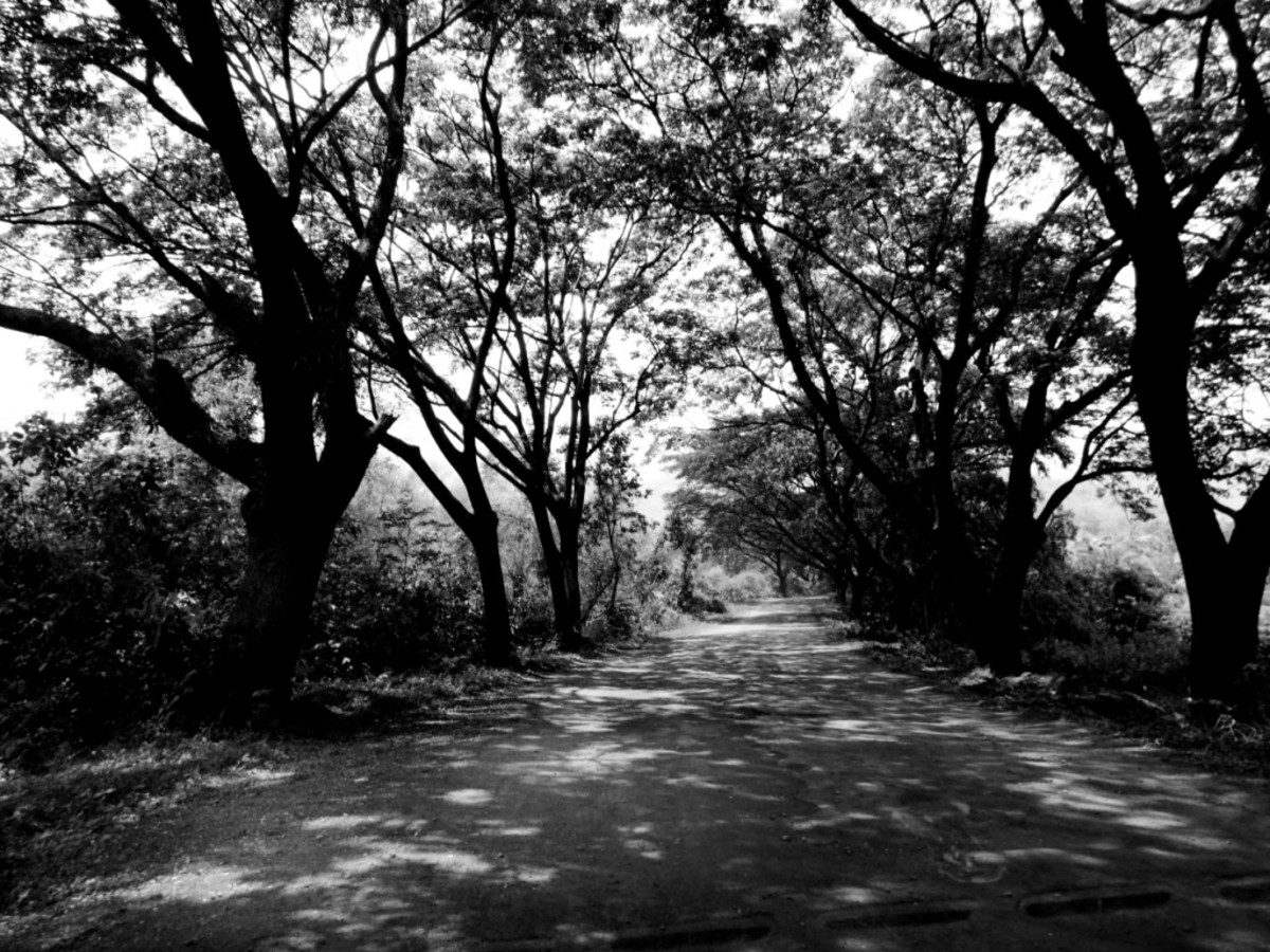 Light & shade in the road to Taptapani