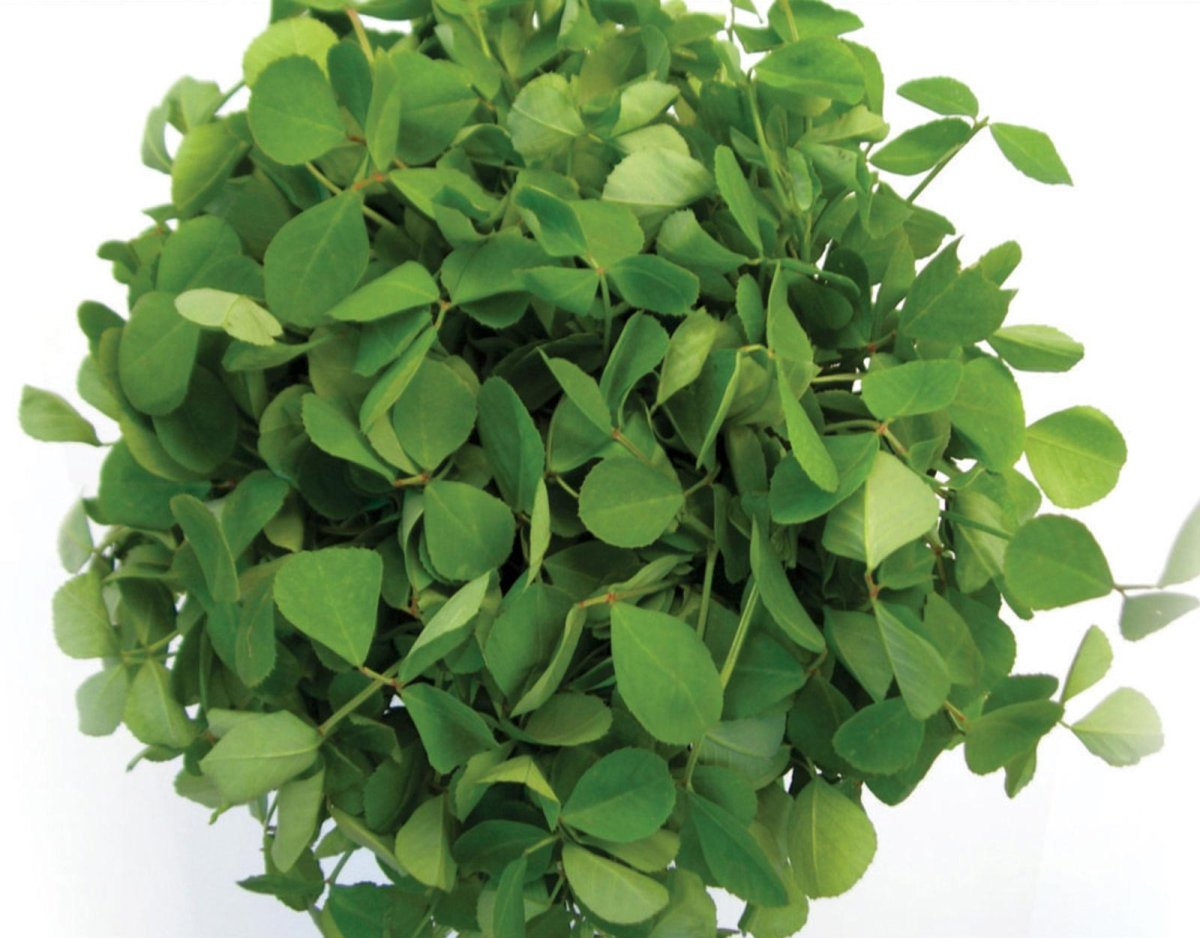 Methi or fenugreek leaves